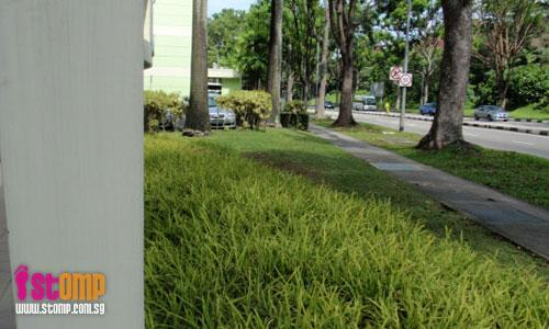 'Dangerous' plants removed from polyclinic grounds