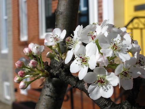Baltimore Spring