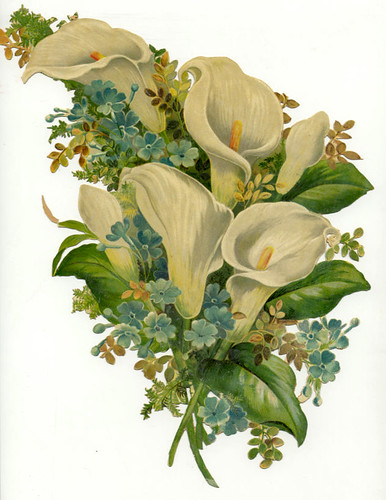 Vintage Die Cut Calla Lillies / Mary Allen Gunter