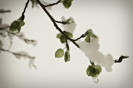 Snow_Storm-6