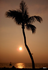 Sunset in Paradise (*Martu*) Tags: ocean sunset silhouette hawaii maui palm silhoutte