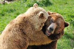 Bears (stephanrudolph) Tags: animal wow germany deutschland nikon europa europe handheld fv10 animalplanet bielefeld otw specanimal 70300mmf4556gvr 70300mmvr d700 flickraward invitedby vosplusbellesphotos alittlebeauty