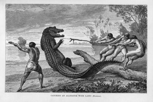 002-Los Ríos Amazonas y Madeira 1875-Cazando un caiman con lazo en el Madeira