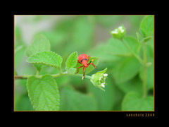 Contrast (SenShots / Senthilmani's Photography) Tags: white macro green texture nature beautiful closeup canon pattern dof view angle insects bugs depthoffield pointofview greenery lovely 2009 closer naturally lowangle macrophotography canonphotography canonefs1855mmf3556 canoneos1000d canoneosdigitalrebelxs senshots senthilmani senshotsphotography