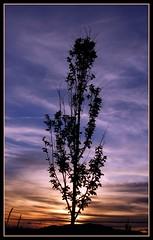 Silueta (Patataasada) Tags: sunset sky españa tree silhouette landscape atardecer spain huesca searchthebest paisaje cielo árbol puestadesol silueta ocaso soe jaca pirineo aragón pirineoaragonés blueribbonwinner abigfave theunforgettablepictures a3b a3bchallenge flickrestrellas quarzoespecial