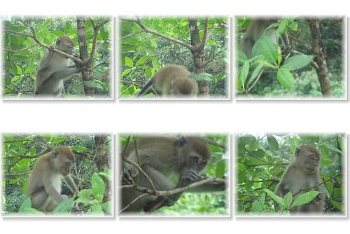 你拍攝的 猴子。