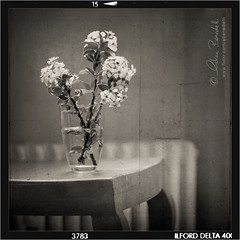 a corner of my home () Tags: flowers stilllife house home andy composition casa chair andrea andrew fiori sedia radiator 50mmf14 windowlight termosifone composizione benedetti lucenaturale nikond90  obramaestra