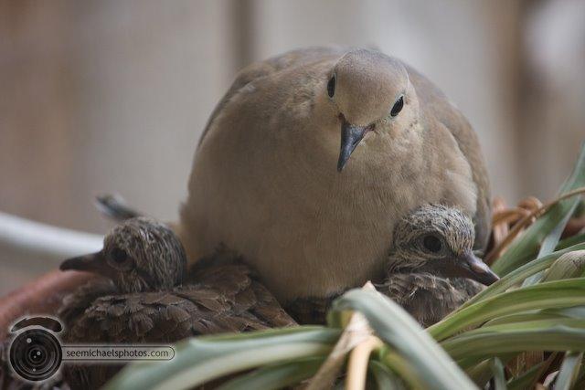 Birdies 50609© Michael Klayman-001-2