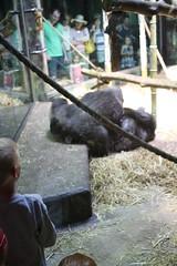 Louisville Zoo 130 (cellophane303) Tags: louisvillezoo