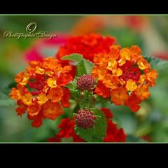 Happy Gorgeous Green Thursday My Friends:-) (_AcL_) Tags: explore378 nikond40 explorefp acl
