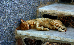 Happy dreams (king David Israel) Tags: animal gato siesta felino animales dormir felicessueos anawesomeshot happydreams melillalavieja
