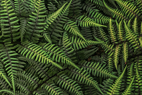 [フリー画像] 花・植物, 植物(その他), シダ植物, グリーン, 201005032300