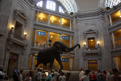 Elephant at the National Museum of Natural History