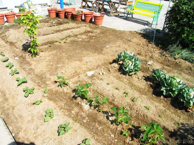 Sendai Garden