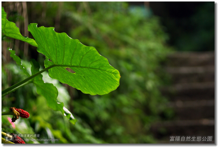 fuyang01