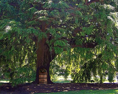 tree-with-door-posterized