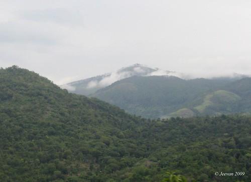 mist sit on hills