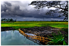 monsoon's here! (Soumya Bandyopadhyay) Tags: clouds rural landscape afternoon paddy monsoon westbengal gradnd aplusphoto pentaxk200d pentax1855mmii