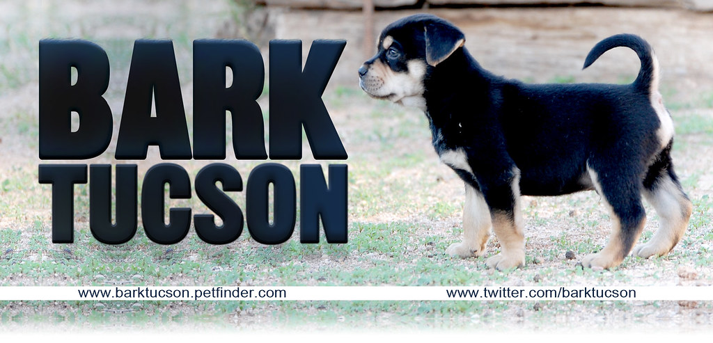 BARK petfinder header