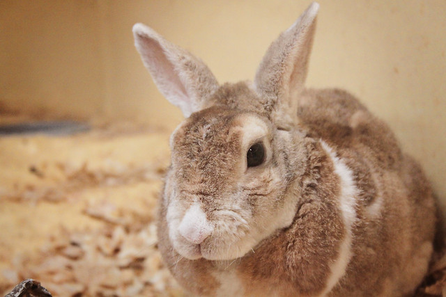 MODS bunny