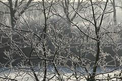 Tree with snow (Jerry Kooyman) Tags: winter snow holland tree frozen bevroren sneeuw nederland delft boom rijp