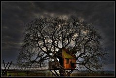 Somerset Treehouse. (Romany WG) Tags: house tree beautiful glastonbury surreal somerset treehouse story fairy pinocchio moodyskies hauntingly