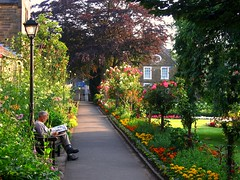 Saturday Morning in the Park (UGArdener) Tags: park roses summer england english june unitedkingdom britain derbyshire saturday summertime marigolds bakewell saturdaymorning englishgardens copperbeechtree morningnewspaper anenglishsummer englishtravel