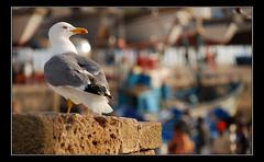 Essaouira I (Francecso) Tags: africa blue sky cloud yellow gold golden sand nikon desert dune sigma morocco berber marocco souk medina touareg deserto sabbia cammello dromedario sigma18200 d40x