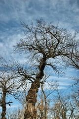 Twins (Bo 61) Tags: sky cloud lake tree green nature water clouds twins mud croatia zagreb geo 1on1 jarun twtme