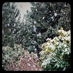 2009.03.09 -- PDX Snow