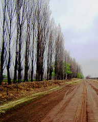 Camino de tierra (DiEgo bErrA) Tags: trees way arboles camino cloudy earth arbres terre nublado desolate chemin tierra nuageux dsol desolado