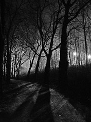 Into The Wood (a_em) Tags: wood trees light blackandwhite night forest germany blackwhite fuji finepix sw schwarzweiss baden constance mainau badenwürttemberg lakeconstance constanza lacdeconstance bodenseeregion lagodiconstanza s5800 lagodeconstanz