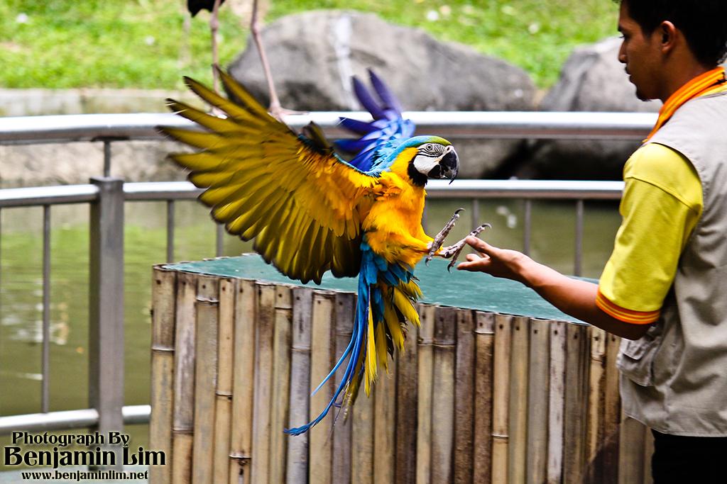 birdpark1_36