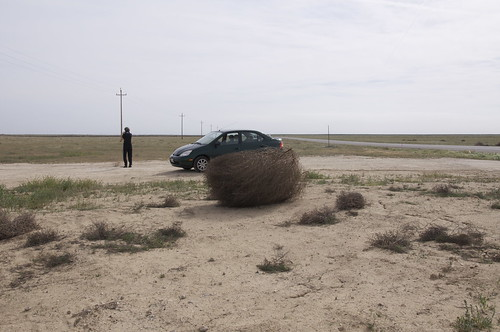A giant tumbleweed threatens Mom and Old Paint.