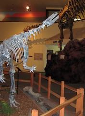 DInosaur Journey Museum