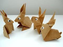 coelhos pensantes?