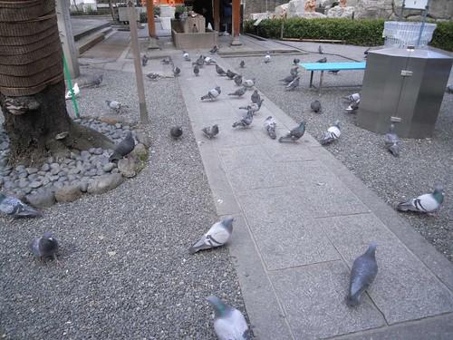 頂法寺(六角堂)』@京都-20