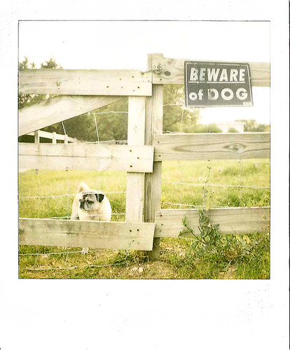 90/365  Beware of Dog (Kallie)