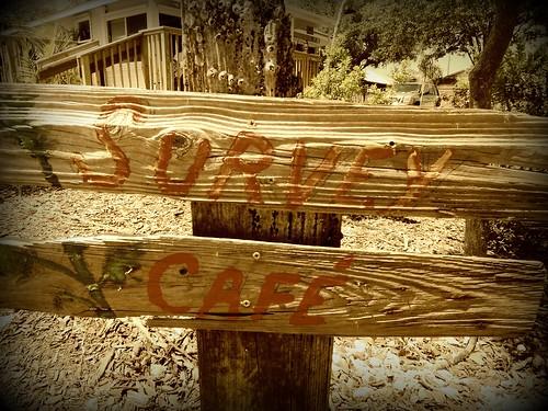 Survey Cafe Bonita Springs