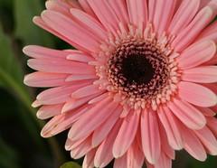 立派に咲き誇る花