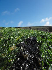 Seaweed On A Rock (KJ34) Tags: blue sea sky seaweed green beach clouds coast rocks bluesky messy slimy headland strands