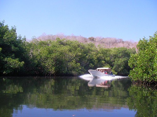 Panga in Mangroves
