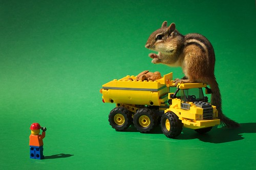 Chipmunk with LEGO dump truck