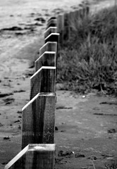 Stand (1972Photo) Tags: wood ireland sea black canon blackwhite sand posts breach 400d