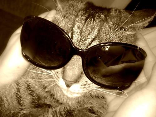 katinas su akiniais