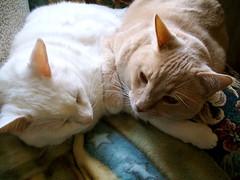 Love Bugs on Furry Friday (Gail S) Tags: cats pinky thepuss catsandwindows