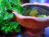 My small garden (Puykamo@Tнai) Tags: trip travel beautiful thailand lights tour handmade thai pottery neat nonthaburi นนทบุรี ท่องเที่ยว kohkret ลายไทย puykamo thaiproduct เกาะเกร็ด thaipottery thaitexture ลายวิจิตร แสงและเงา เครื่องปั้นดินเผา