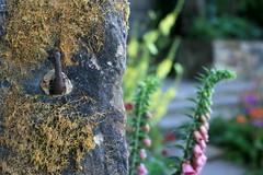 Chelsea Flower Show [10] ... wall ... (_nejire_) Tags: england plant flower london nature wall canon flora chelsea bokeh explore foxglove f28 carlzeiss chelseaflowershow 10faves 950pm nejire 400d eos400d canoneos400d fave10 planart50mm mhashi carlzeissplanart1450ze 4511194g820am