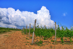 Cotton (TB79) Tags: soe hdr abigfave skylandscapes canoneos40d theunforgettablepictures picturefantastic atomicaward tb79 tommasoburacchi sienaandsurroundings