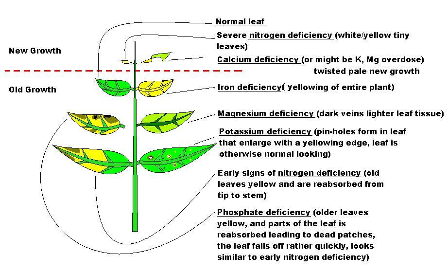 Plant Deficiency Picture Diagram Plant Deficiencies Aquatic
